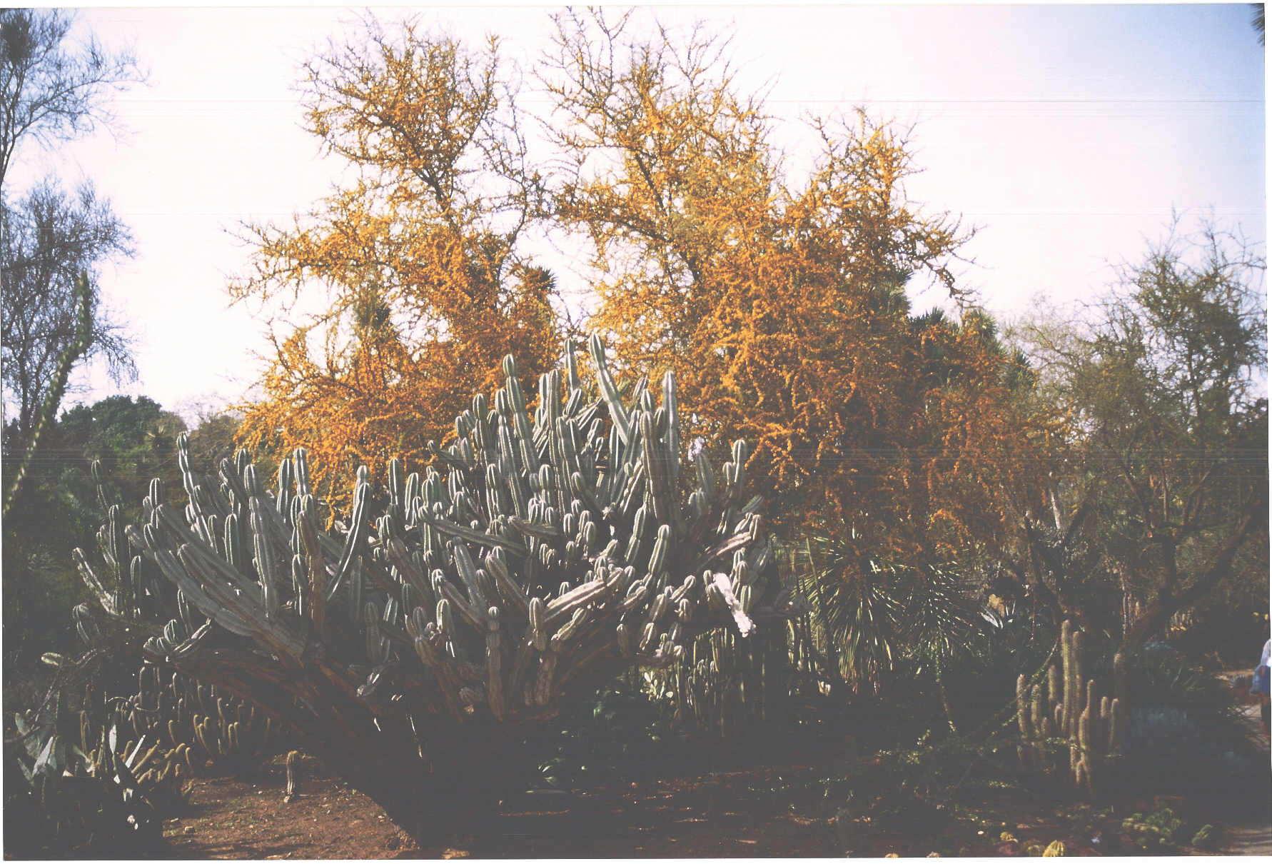 huntingtoncactus.jpg